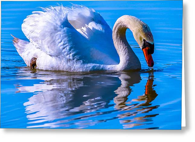 Swans... Greeting Cards - Chance Upon Swan Greeting Card by Brian Stevens