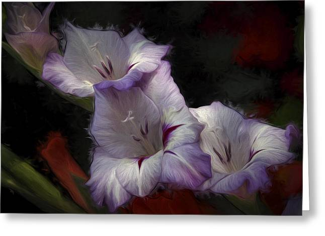 Gladiole Greeting Cards - Chance Greeting Card by Vronja Photon