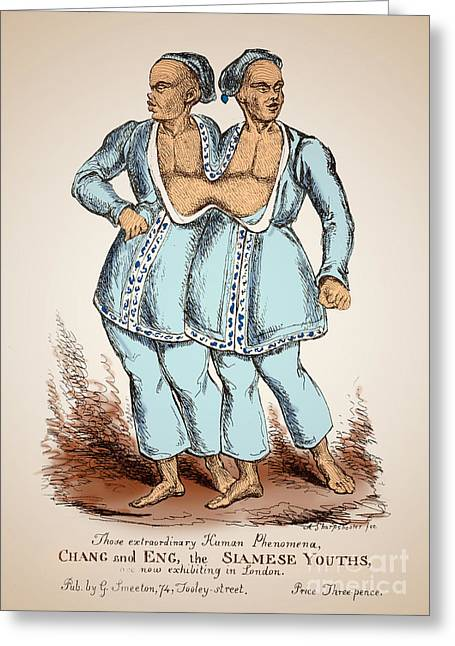 Chang Greeting Cards - Chang And Eng Bunker Siamese Twins Greeting Card by Science Source