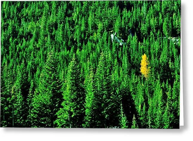 Fir Trees Greeting Cards - Change Is Good Greeting Card by Benjamin Yeager