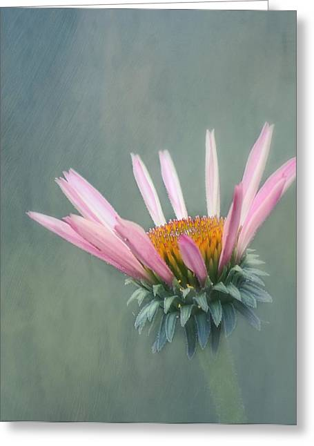 Flower Design Greeting Cards - Change Greeting Card by Kim Hojnacki