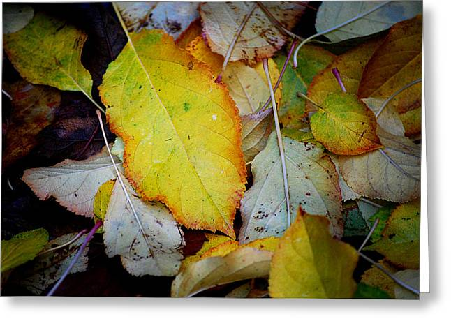 Autum Abstract Greeting Cards - Change of Season Greeting Card by Michelle Wrighton