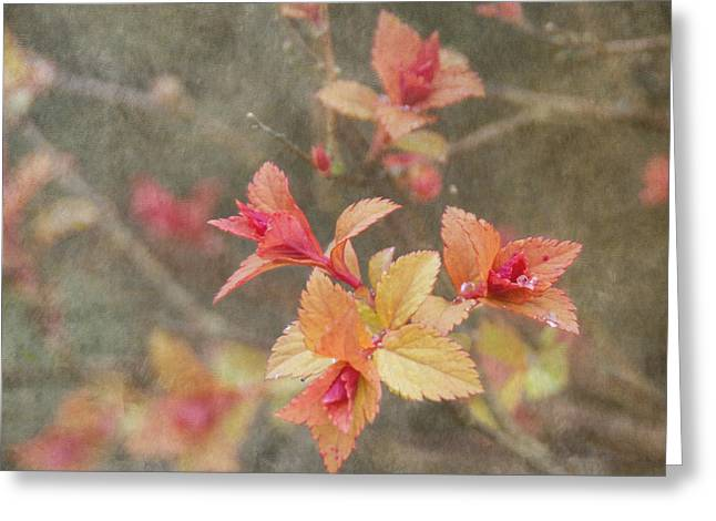 Rain Drop Greeting Cards - Change of Seasons Greeting Card by Angie Vogel