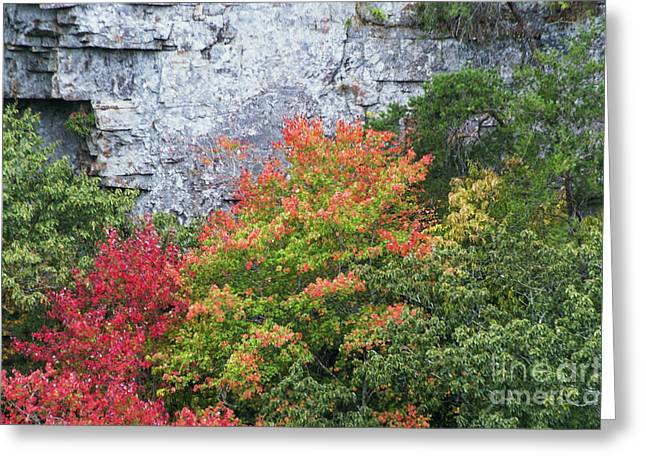 Fall Colors Greeting Cards - Changing Color in Little River Canyon Greeting Card by Bob Phillips