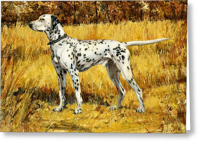 Spotted Dogs Greeting Cards - Chap Dalmation Dog Greeting Card by Don  Langeneckert