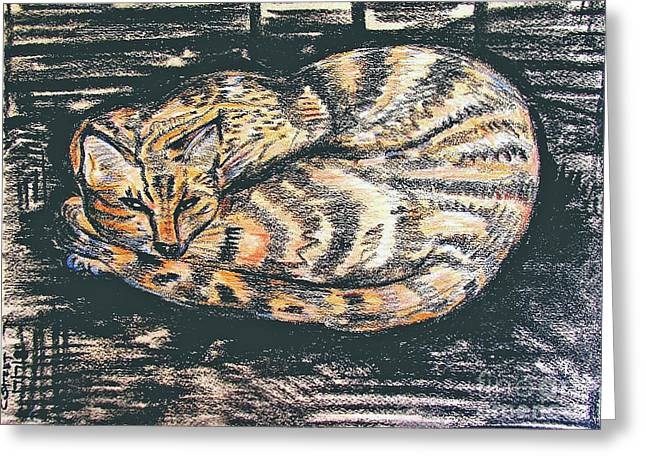 Charcaol Greeting Cards - Charcoal Tabby Greeting Card by Caroline Street