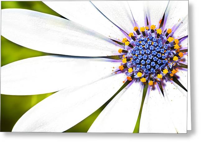 White Flower Greeting Cards - Charismatic Greeting Card by Saami Ansari
