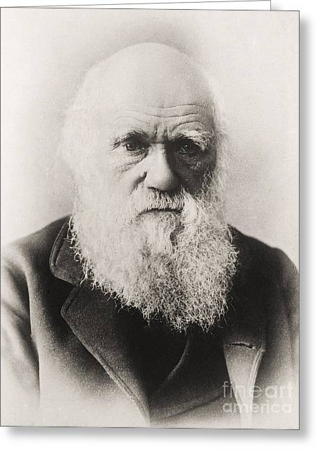 Beard Greeting Cards - Charles Darwin Greeting Card by English School