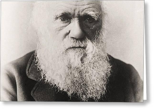 Charles Darwin Greeting Card by English School