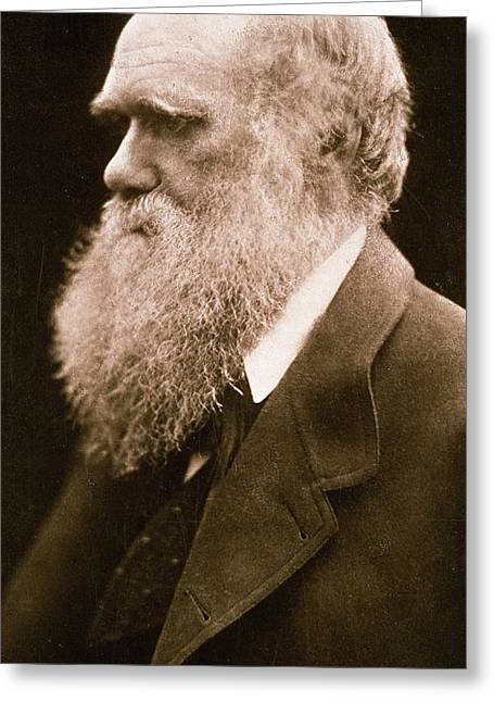 Creationism Greeting Cards - Charles Darwin Greeting Card by Julia Margaret Cameron