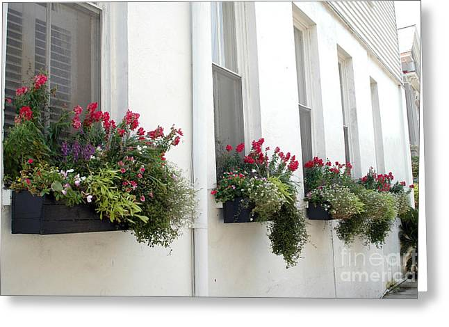 Rainbow Row Greeting Cards - Charleston French Quarter Historic District Dreamy Flowers Window Boxes  Greeting Card by Kathy Fornal