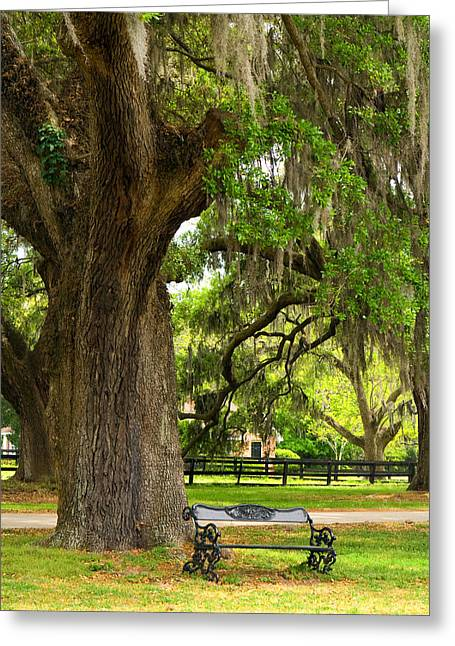 Live Art Photographs Greeting Cards - Charleston Live Oaks and Garden Bench Greeting Card by Stephanie McDowell