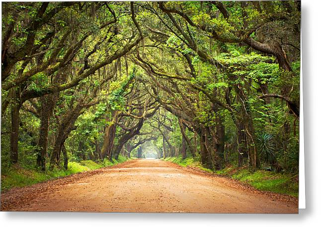 Deep Greens Greeting Cards - Charleston SC Edisto Island - Botany Bay Road Greeting Card by Dave Allen