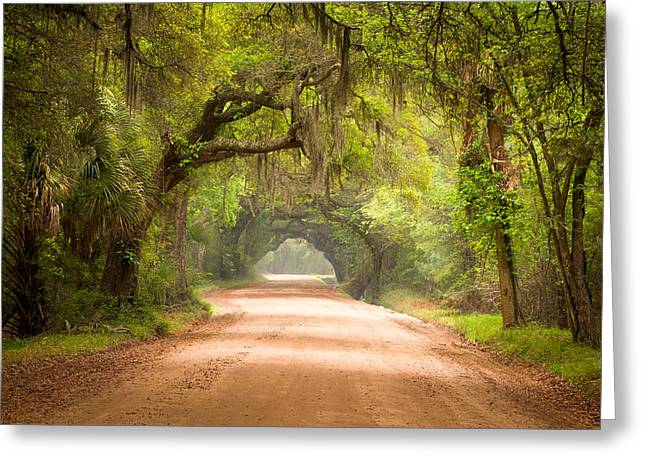 Mist Greeting Cards - Charleston SC Edisto Island Dirt Road - The Deep South Greeting Card by Dave Allen