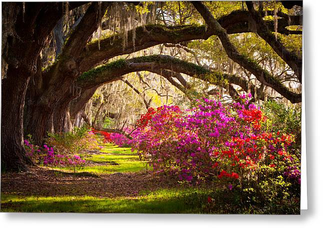 Moss Greeting Cards - Charleston SC Magnolia Plantation Gardens - Memory Lane Greeting Card by Dave Allen