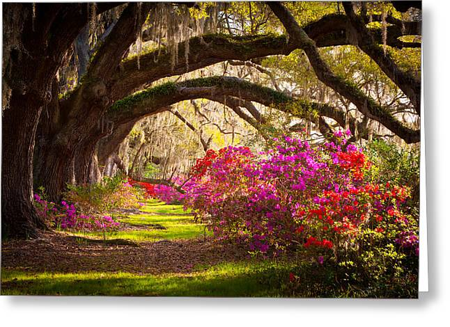 Warm Landscape Greeting Cards - Charleston SC Magnolia Plantation Gardens - Memory Lane Greeting Card by Dave Allen