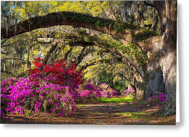Vibrant Green Greeting Cards - Charleston SC Spring Azalea Flowers - A Servants Grace Greeting Card by Dave Allen