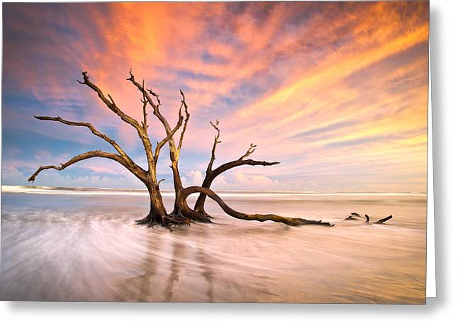 Driftwood Beach Greeting Cards - Charleston SC Sunset Folly Beach Trees - The Calm Greeting Card by Dave Allen
