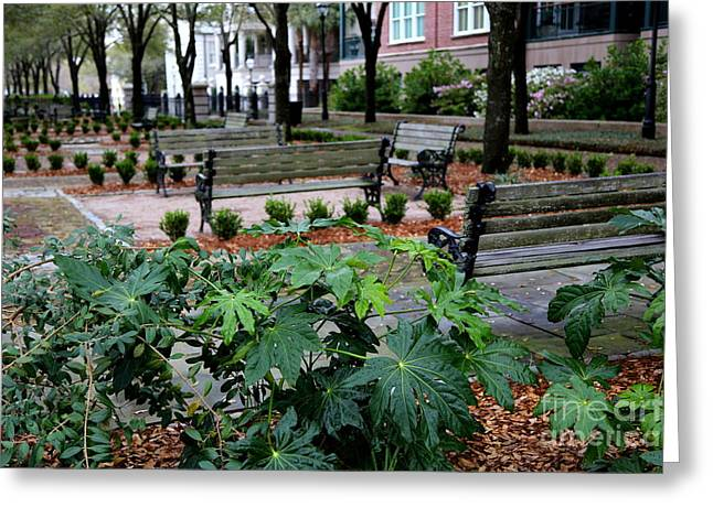 Park Benches Greeting Cards - Charleston Waterfront Park Benches Greeting Card by Carol Groenen