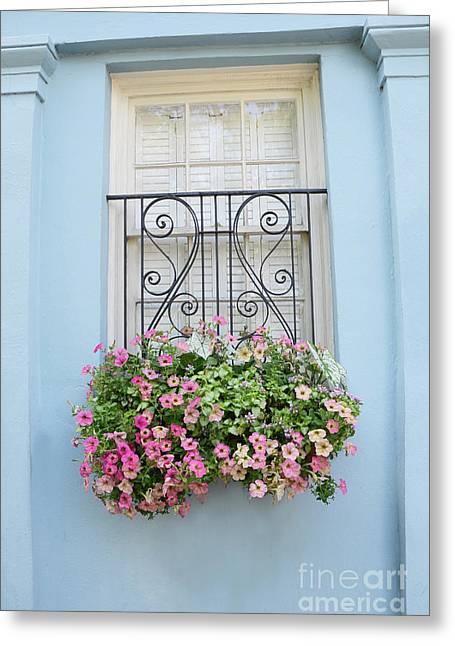 Garden Scene Greeting Cards - Charleston Window Box Flower Photography - Charleston Rainbow Row Blue Aqua Dreamy Flower Window Box Greeting Card by Kathy Fornal