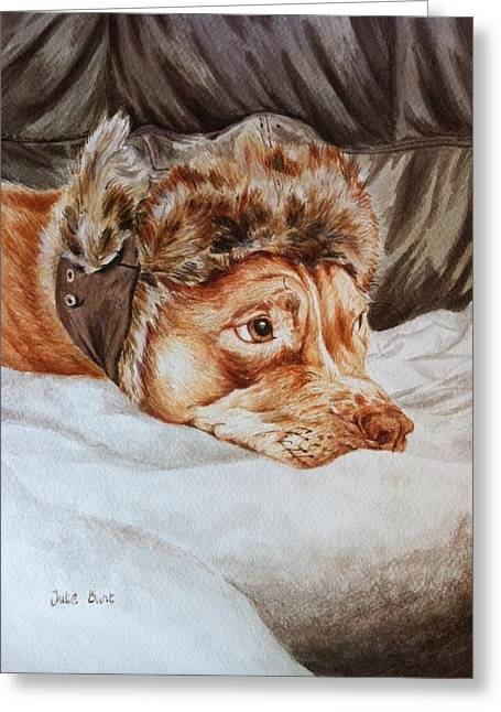 Staffie Greeting Cards - Charlie the Cheeky Chappy Greeting Card by Pet Portraits by Julie Bunt