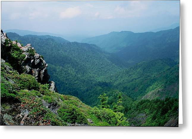 Charlies Bunion Gsmnp Greeting Card by Mary Elizabeth White
