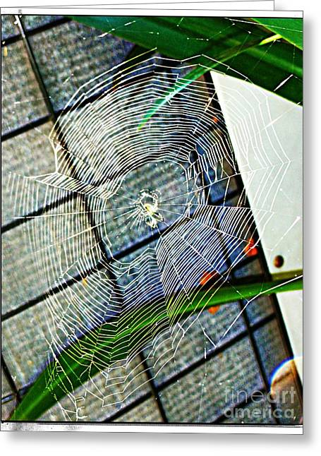 Charlotte's Web Greeting Card by Meagan Hoelzer