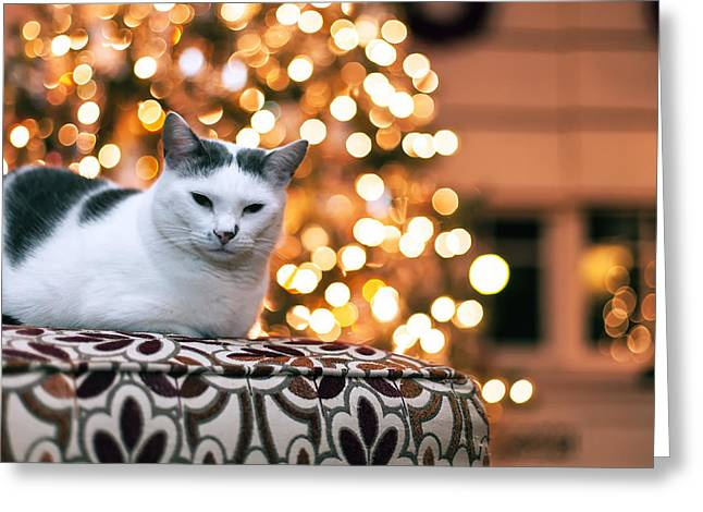 Charly and the Xmas tree Greeting Card by Edward Kreis