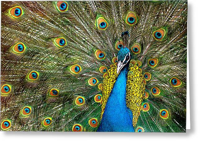 Fauna Greeting Cards - Charming Greeting Card by Ivan Vukelic