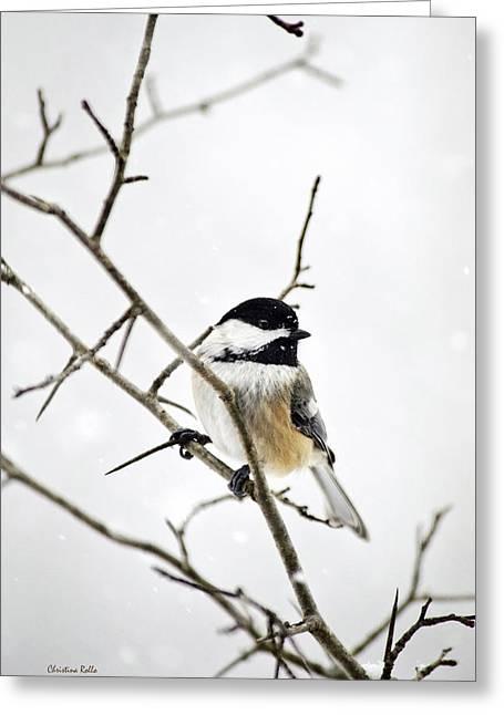 Chickadee Greeting Cards Greeting Cards - Charming Winter Chickadee Greeting Card by Christina Rollo