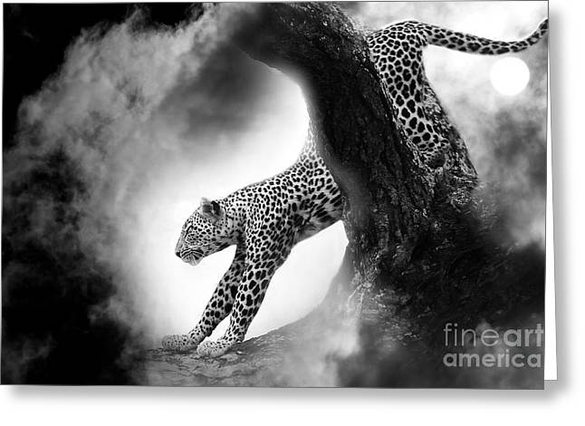 Tiere Greeting Cards - Chasing... Greeting Card by Christine Sponchia