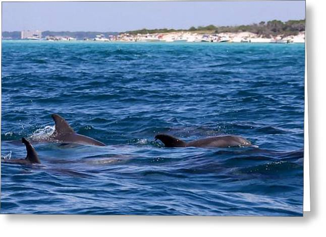 Chasing Dolphins  Greeting Card by Debra Forand