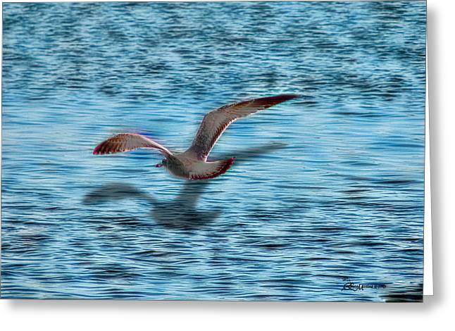 Flying Seagull Mixed Media Greeting Cards - Chasing My Shadow Greeting Card by EricaMaxine  Price
