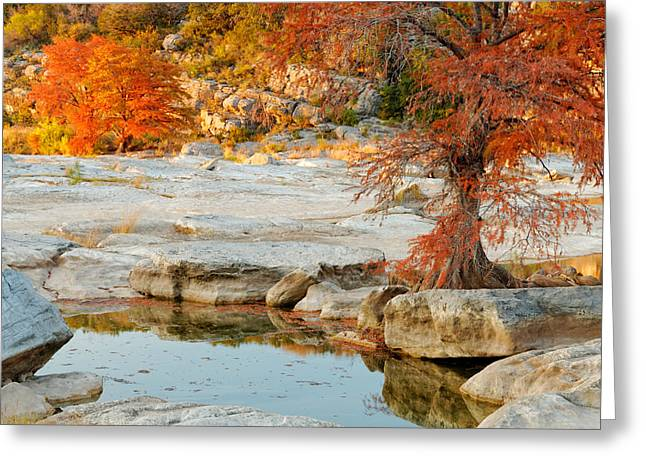 Bald Cypress Greeting Cards - Chasing the Light at Pedernales Falls State Park Hill Country Greeting Card by Silvio Ligutti