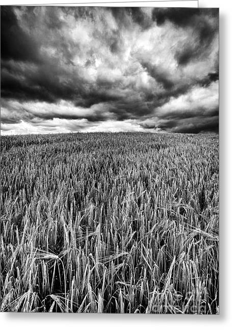Farmers Field Greeting Cards - Chasing the Storm Greeting Card by John Farnan