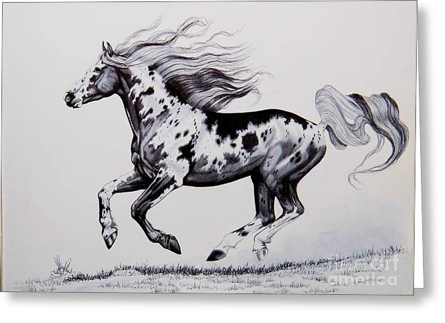 Horse Drawing Greeting Cards - Chasing the Wind Greeting Card by Cheryl Poland