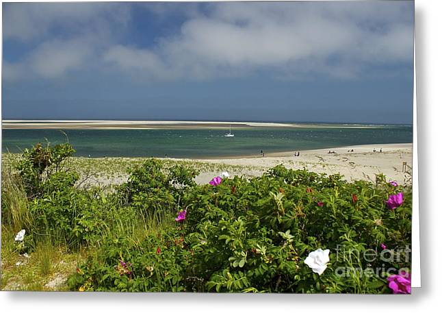 Chatham Greeting Cards - Chatham Beach Greeting Card by Amazing Jules