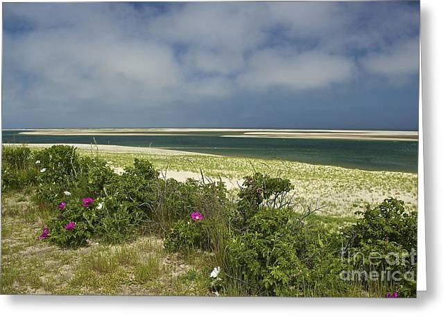 Chatham Greeting Cards - Chatham Beach in Bloom Greeting Card by Amazing Jules