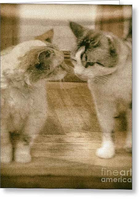 Chatty Greeting Cards - Chatty Kitties Greeting Card by Jacqui Fiels
