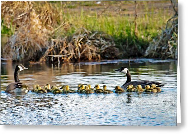 Cheaper By The Dozen Greeting Card by Robert Bales