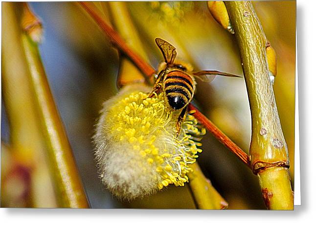 Stinger Greeting Cards - Check out my Beehind Greeting Card by Frozen in Time Fine Art Photography