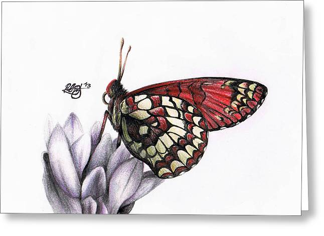 Checkerspot Greeting Cards - Checkerspot Greeting Card by Rachel Rothberg