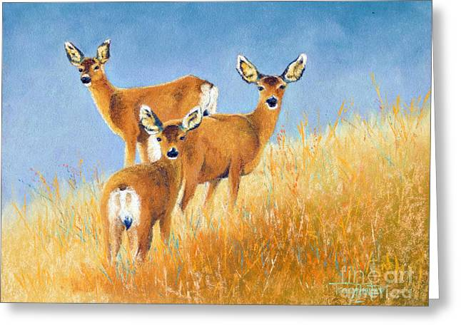 White Tail Pastels Greeting Cards - Checking the Back Trail Greeting Card by Tracy L Teeter