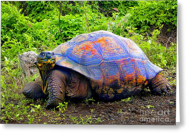 Tortuga Greeting Cards - Cheeky Tortuga In The Galapagos Greeting Card by Al Bourassa
