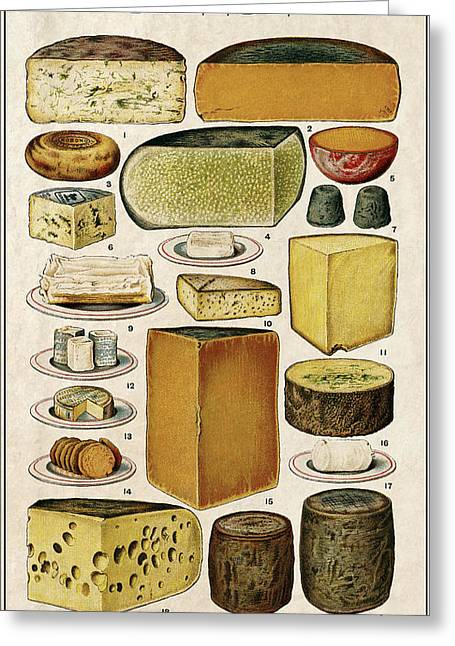 Swiss Cheese Greeting Cards - Cheese Lovers Panel  1907 Greeting Card by Daniel Hagerman
