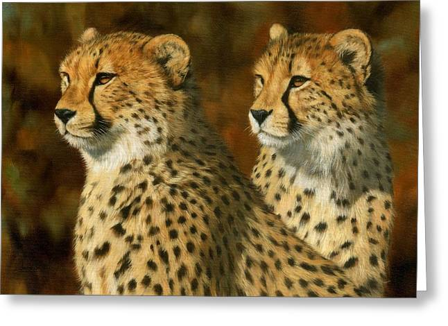 Big Cat Art Greeting Cards - Cheetah Brothers Greeting Card by David Stribbling