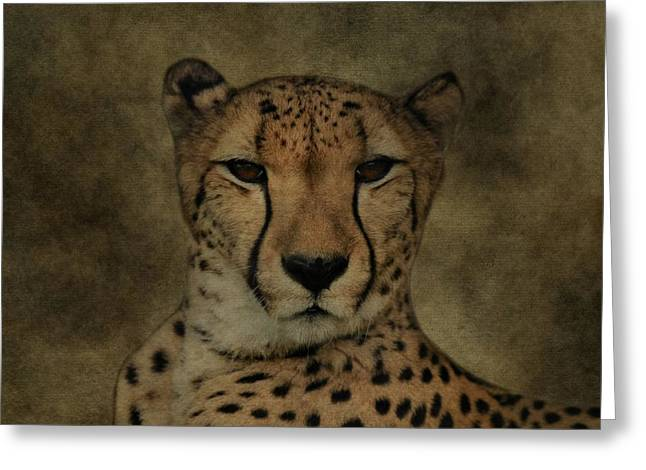 Speed Trap Greeting Cards - Cheetah Face Greeting Card by Dan Sproul