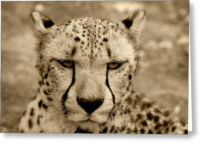 Dot Pyrography Greeting Cards - Cheetah Greeting Card by Modern Art Prints