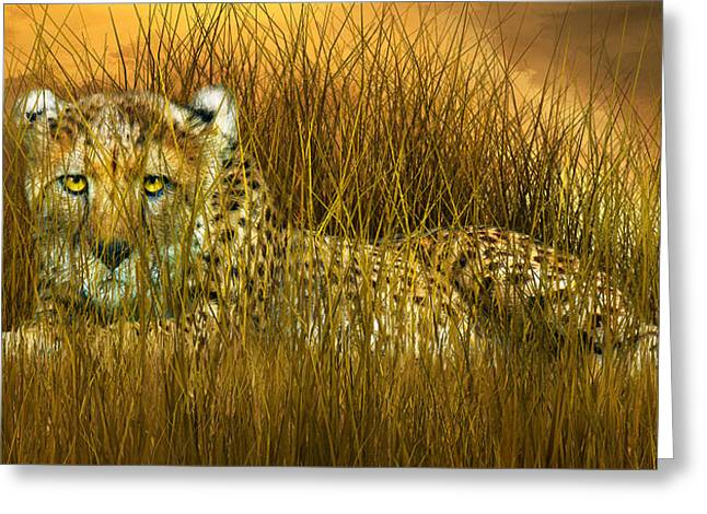 Cheetah - In The Wild Grass Greeting Card by Carol Cavalaris