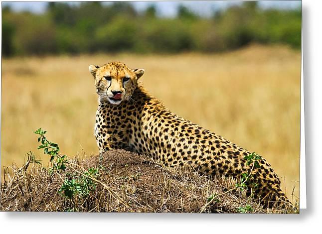 Hunt Pyrography Greeting Cards - Cheetah Greeting Card by Kongsak Sumano